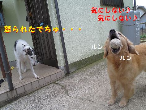 d_20130605074424.jpg