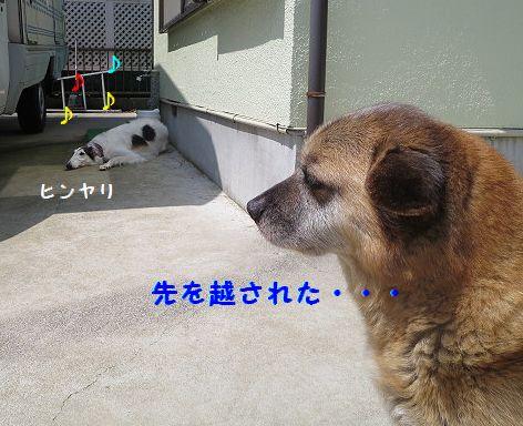 d_20130619074838.jpg