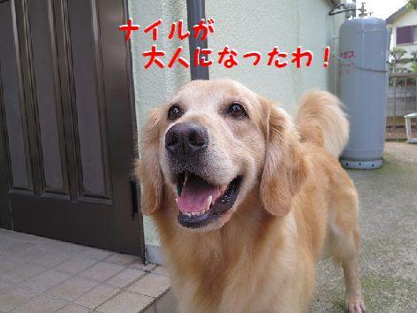 d_20130620074648.jpg