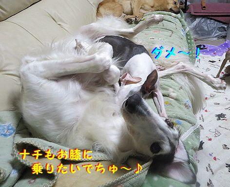 d_20130622104119.jpg