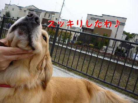 e_20120308071740.jpg