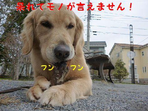 e_20120315072331.jpg