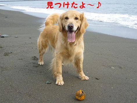 e_20120429101235.jpg