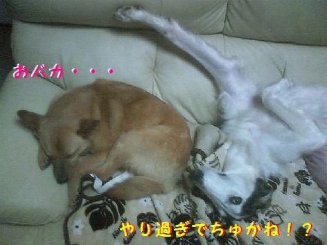 e_20130321075426.jpg
