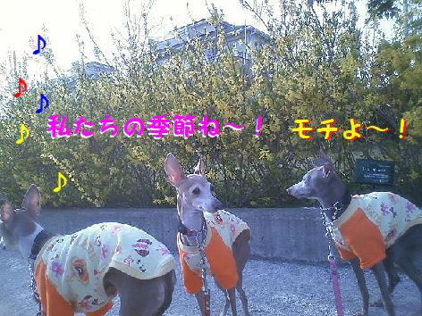 e_20130324111520.jpg