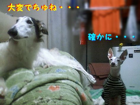 e_20130327075114.jpg