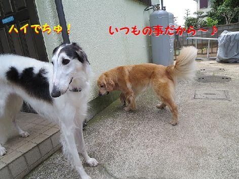 e_20130605074423.jpg
