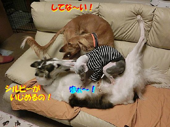 e_201402070745140ac.jpg