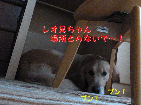 f_20120215071815.jpg