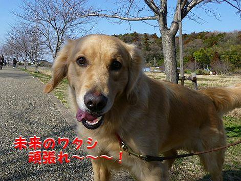 f_20120304071421.jpg
