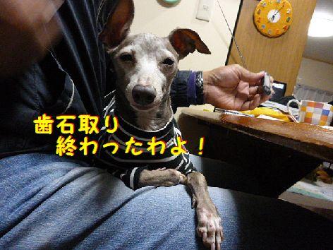 f_20120307071449.jpg