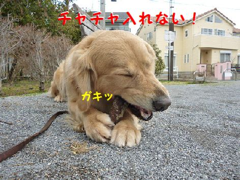 f_20120315072331.jpg