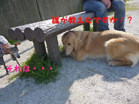 f_20120413072112.jpg