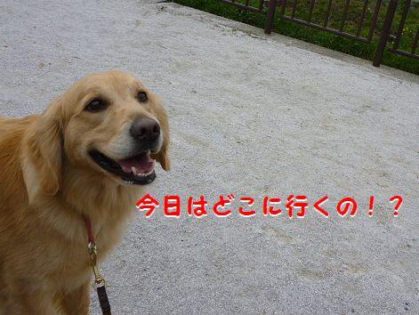 f_20120414090714.jpg