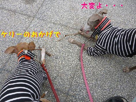 f_20120418070938.jpg