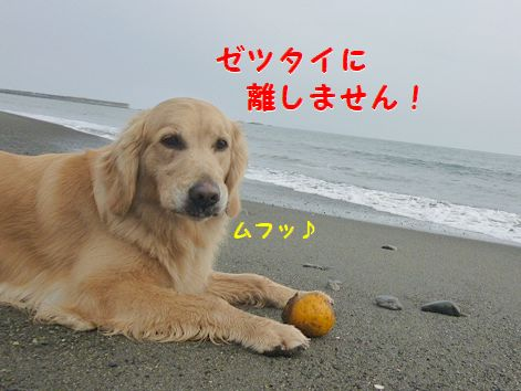 f_20120429101234.jpg