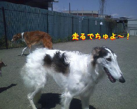 f_20130413104339.jpg
