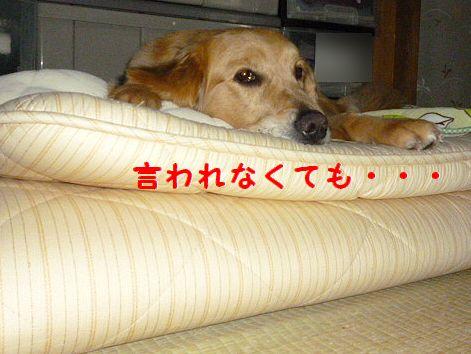 g_20120304071435.jpg