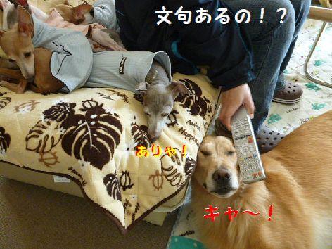 g_20120407145327.jpg
