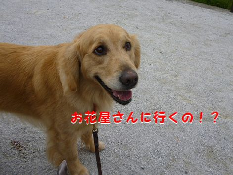 g_20120414090735.jpg