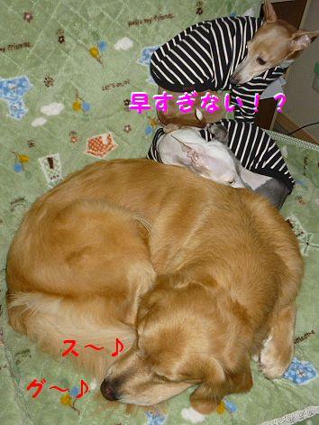 h_20120325094719.jpg