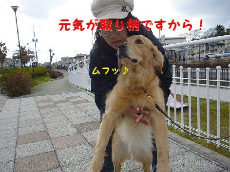 h_20120327072758.jpg