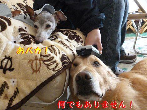 h_20120407145326.jpg