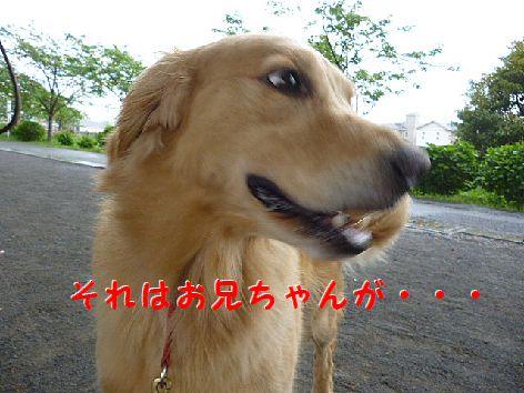 h_20120503094702.jpg