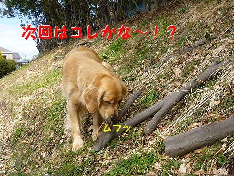 i_20120228070633.jpg