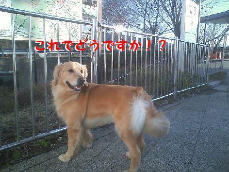 i_20120326071414.jpg