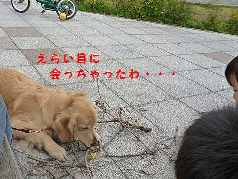 i_20120418071002.jpg