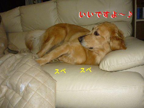 i_20120427073251.jpg