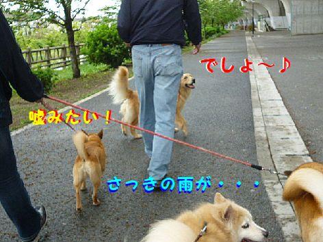 i_20120504092246.jpg