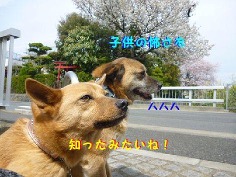 j_20120418071001.jpg