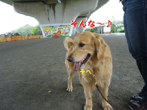 m_20120503094712.jpg