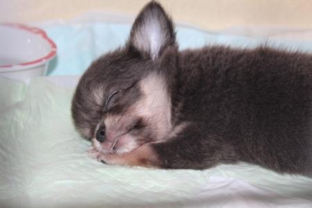 おやすみあんじゅ110925