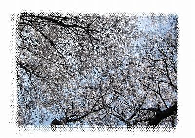 IMG_3599-1.jpg