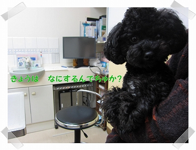 IMG_3720-1.jpg