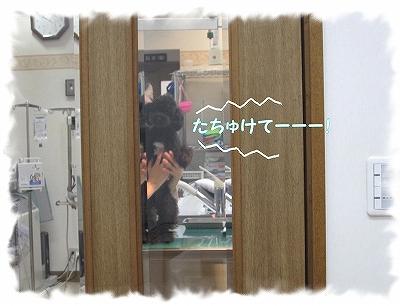 IMG_3721-1.jpg