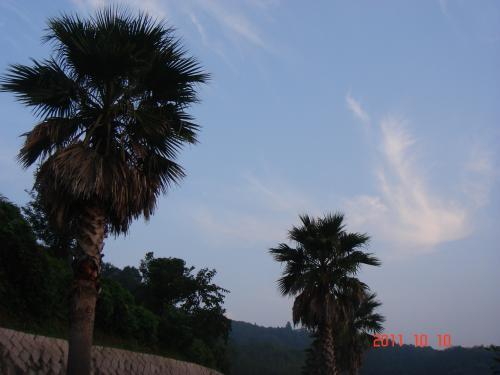 DSC07249_convert_20111017203235.jpg