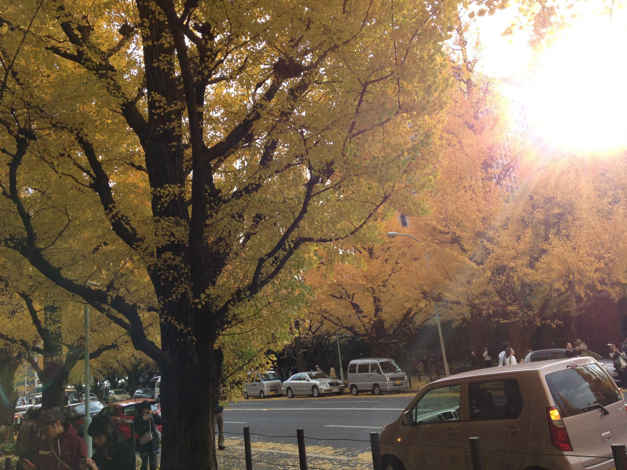 聖徳絵画館銀杏並木