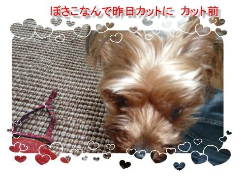 P1020462.jpg