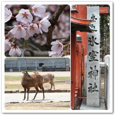 nara_himuro_convert_20120407201105.jpg