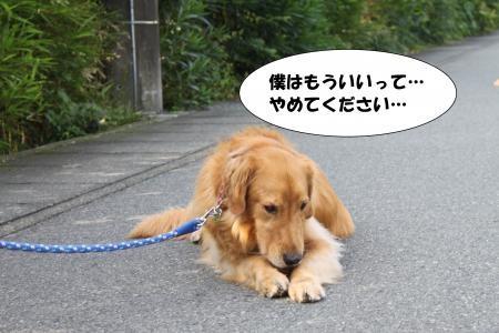 ★散歩11