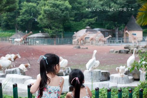 多摩動物公園 5