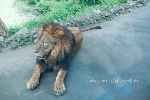 多摩動物公園 7