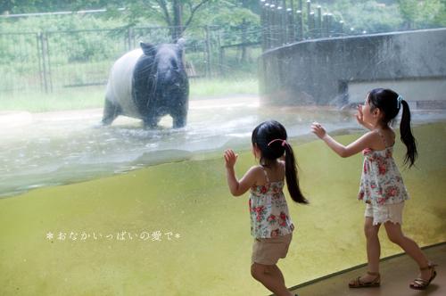 多摩動物公園 12