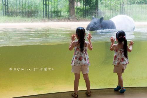 多摩動物公園 13