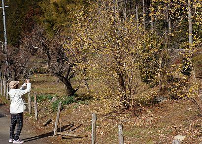 ロウバイの咲く洞慶院へ-3