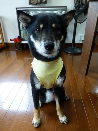 盲導犬サポートSHOP17